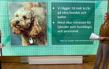 husdjur banner