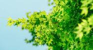 green-leafs